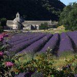 Abbey de Sénanque, Provence